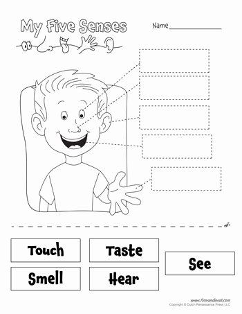 5 Senses Worksheets for Preschoolers Inspirational Free Five Senses Worksheets for Kids