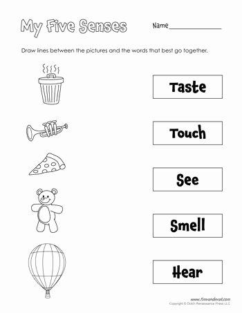 5 Senses Worksheets for Preschoolers Kids A Printable Five Senses Matching Worksheet for Preschool
