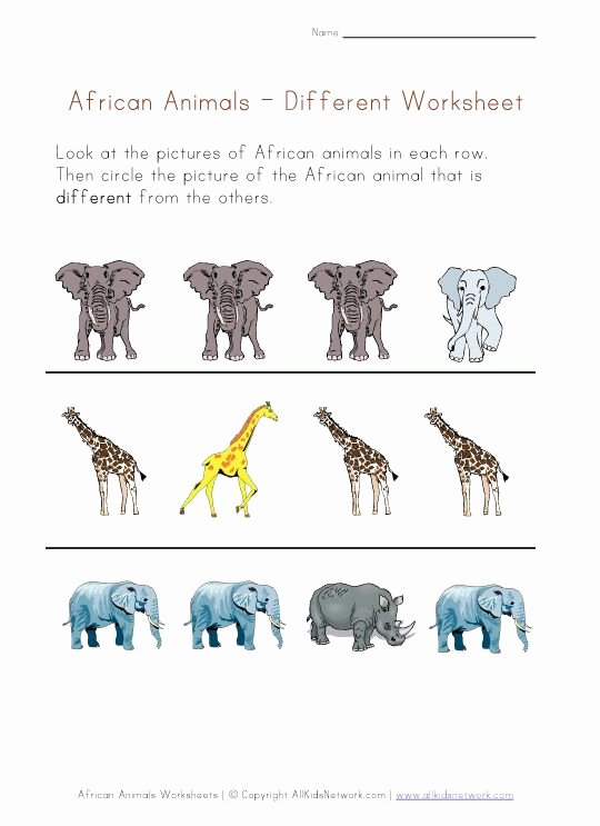 African Animals Worksheets for Preschoolers Fresh African Animals Worksheet Different