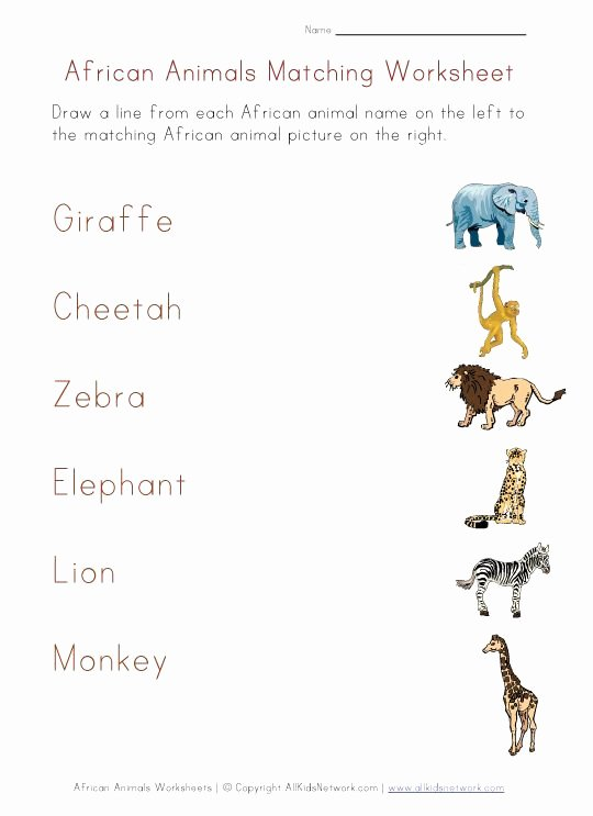 African Animals Worksheets for Preschoolers Lovely Matching Worksheet African Animals