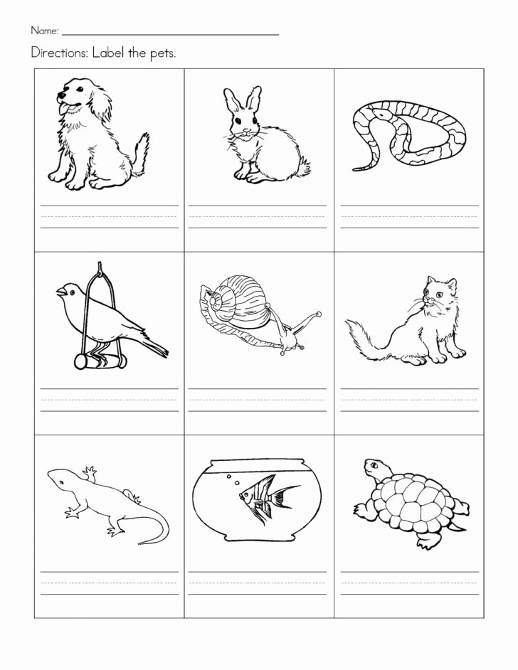 Animal Worksheets for Preschoolers Free Free Printable Pet Worksheets Pets for Preschool