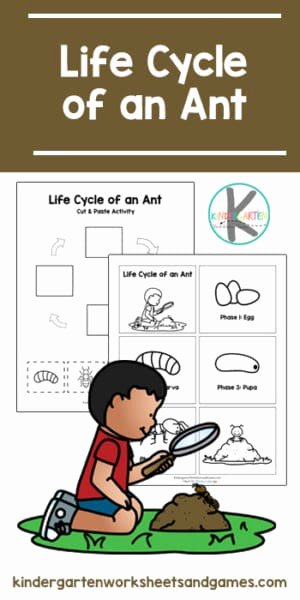 Ant Worksheets for Preschoolers Ideas Free Life Cycle Of An Ant Printable