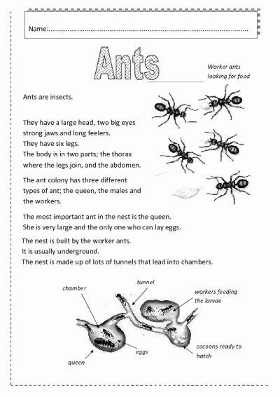 Ant Worksheets for Preschoolers Lovely Ants Worksheet Free Esl Printable Worksheets Made by