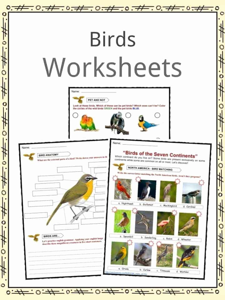 Bird Worksheets for Preschoolers Best Of Bird Facts Worksheets Habitat Diet & Information for Kids