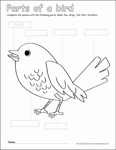 Bird Worksheets for Preschoolers Free Label and Color the Parts Of A Bird