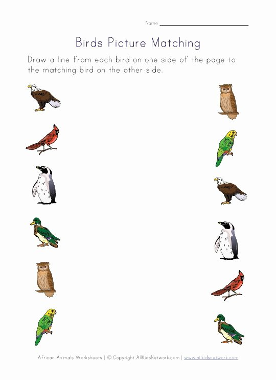 Bird Worksheets for Preschoolers Fresh Birds themed Worksheets for Kids