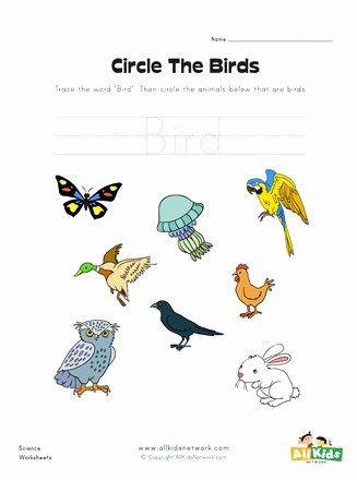 Bird Worksheets for Preschoolers Fresh Circle the Birds Worksheet