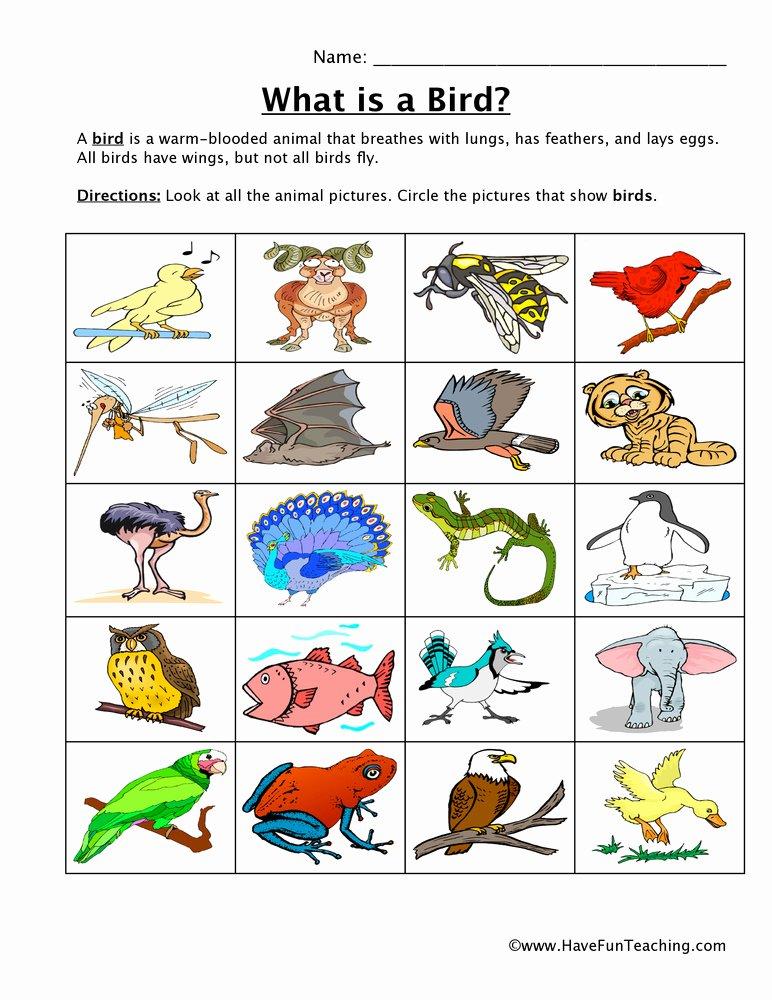 Bird Worksheets for Preschoolers Kids Bird Classification Worksheet