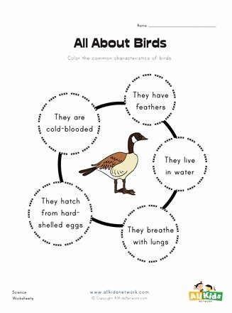 Bird Worksheets for Preschoolers top All About Birds Worksheet