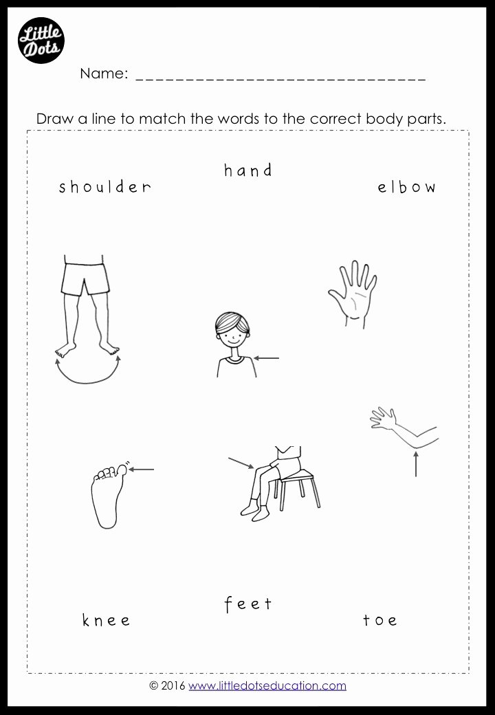 Body Parts Printable Worksheets for Preschoolers top Free Body Parts Worksheets for Preschool