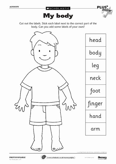 Body Parts Worksheets for Preschoolers Fresh Pin On Preschool theme Body Parts
