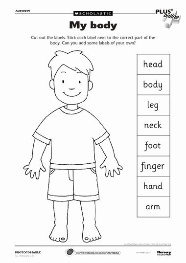 Body Worksheets for Preschoolers New Pin On Vallada