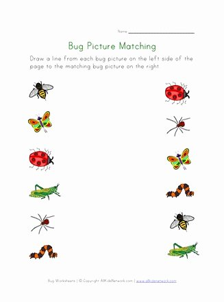 Bug Math Worksheets for Preschoolers Fresh Bugs Worksheet for Kids Picture Matching