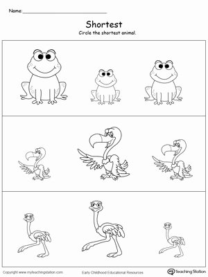 Concept Worksheets for Preschoolers Inspirational Early Childhood Measurement Worksheets