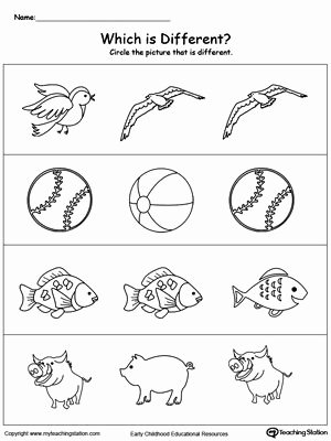 Concept Worksheets for Preschoolers New Identify which Picture is Different