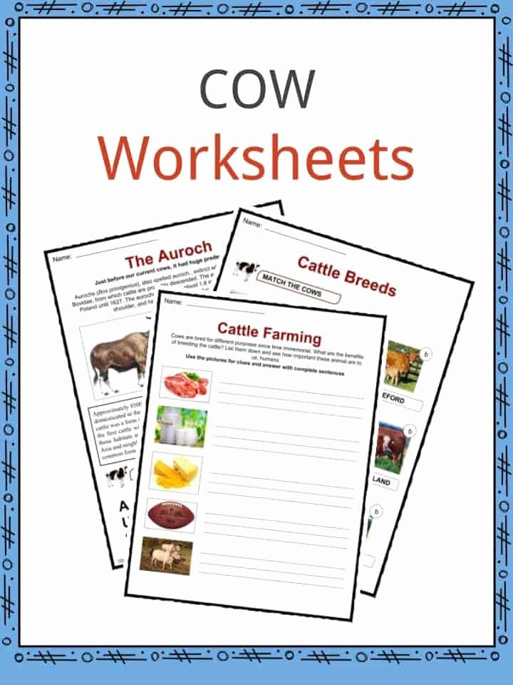 Cow Worksheets for Preschoolers Lovely Cow Facts and Worksheets for Kids • Kidskonnect