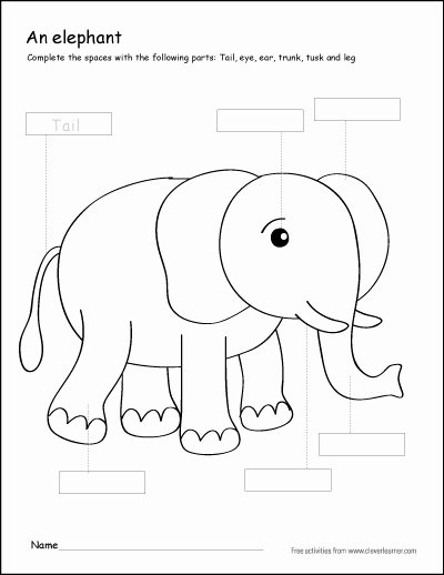Elephant Worksheets for Preschoolers Best Of Colour the Parts Of the Elephant