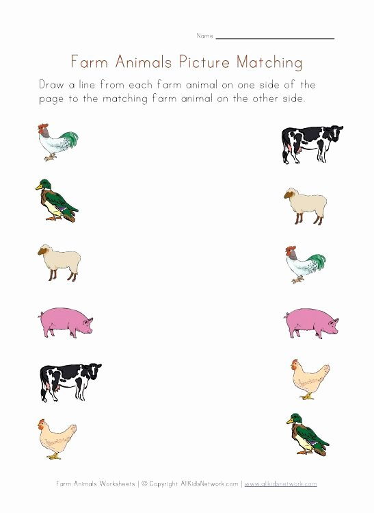 Farm Animals Math Worksheets for Preschoolers top Farm Animals Worksheet Picture Matching