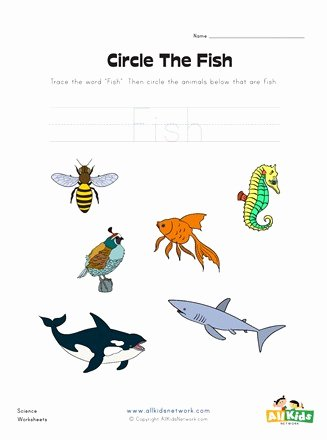 Fish Worksheets for Preschoolers Inspirational Circle the Fish Worksheet