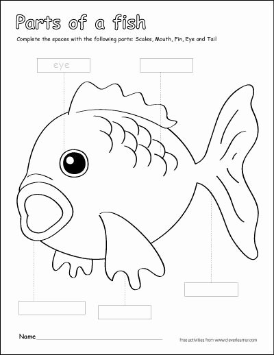 Fish Worksheets for Preschoolers Lovely Parts Of A Fish Preschool Colouring Activity