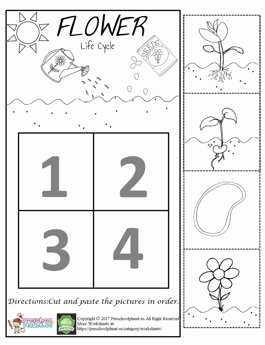 Flowers Worksheets for Preschoolers Fresh Flower Life Cycle Worksheet – Preschoolplanet