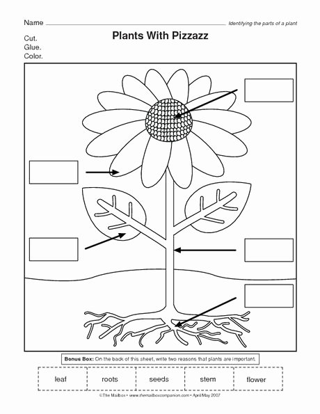 Flowers Worksheets for Preschoolers Fresh the Mailbox