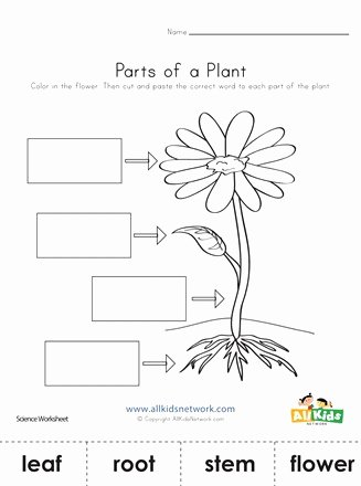 Flowers Worksheets for Preschoolers Kids Parts Of A Plant Cut and Paste