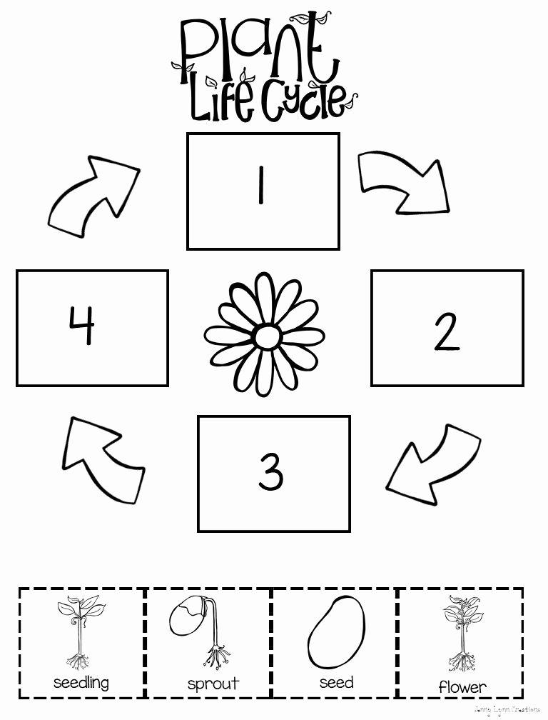 Flowers Worksheets for Preschoolers top Preschool Level Plant Life Cycle Worksheet
