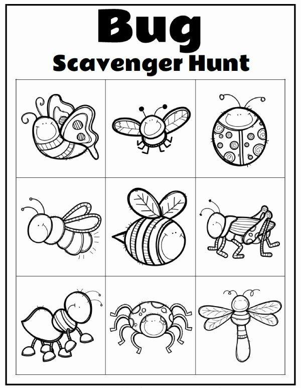 Free Bug Worksheets for Preschoolers Printable Worksheet Printable Worksheets for Preschool Extraordinary