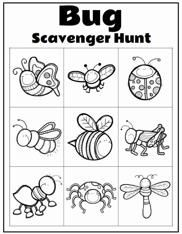 Free Bug Worksheets for Preschoolers Printable Worksheet Printable Worksheets for Preschool Extraordinary