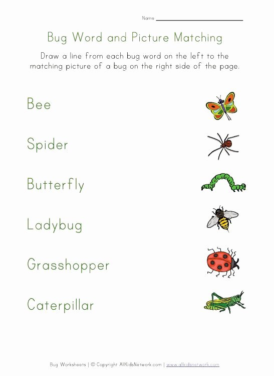 Free Bug Worksheets for Preschoolers top Bug Worksheets for Kids