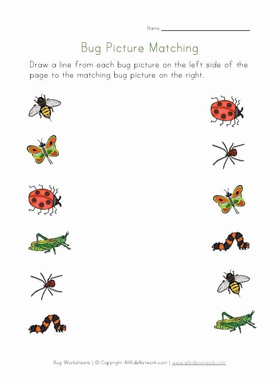 Free Bug Worksheets for Preschoolers top Untitled