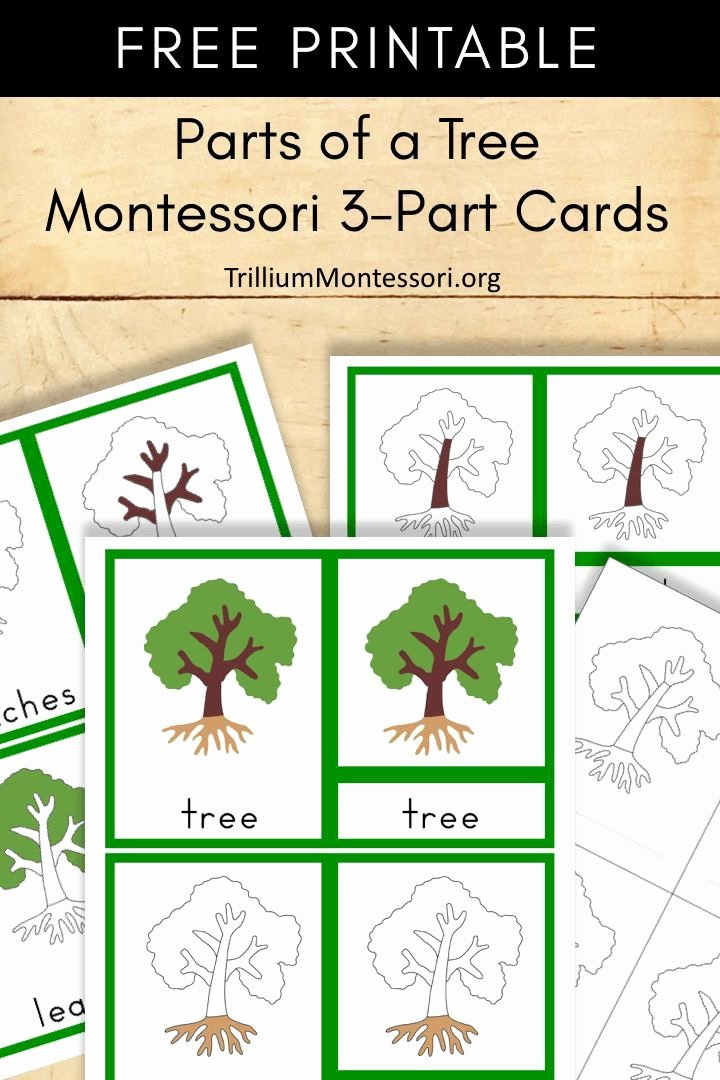 Free Montessori Worksheets for Preschoolers Best Of Free Montessori Printable Parts Of A Tree Trillium