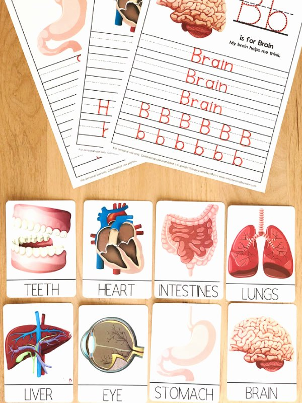 Free Printable Body Worksheets for Preschoolers Printable Human Body Worksheets for Kindergarten & Up