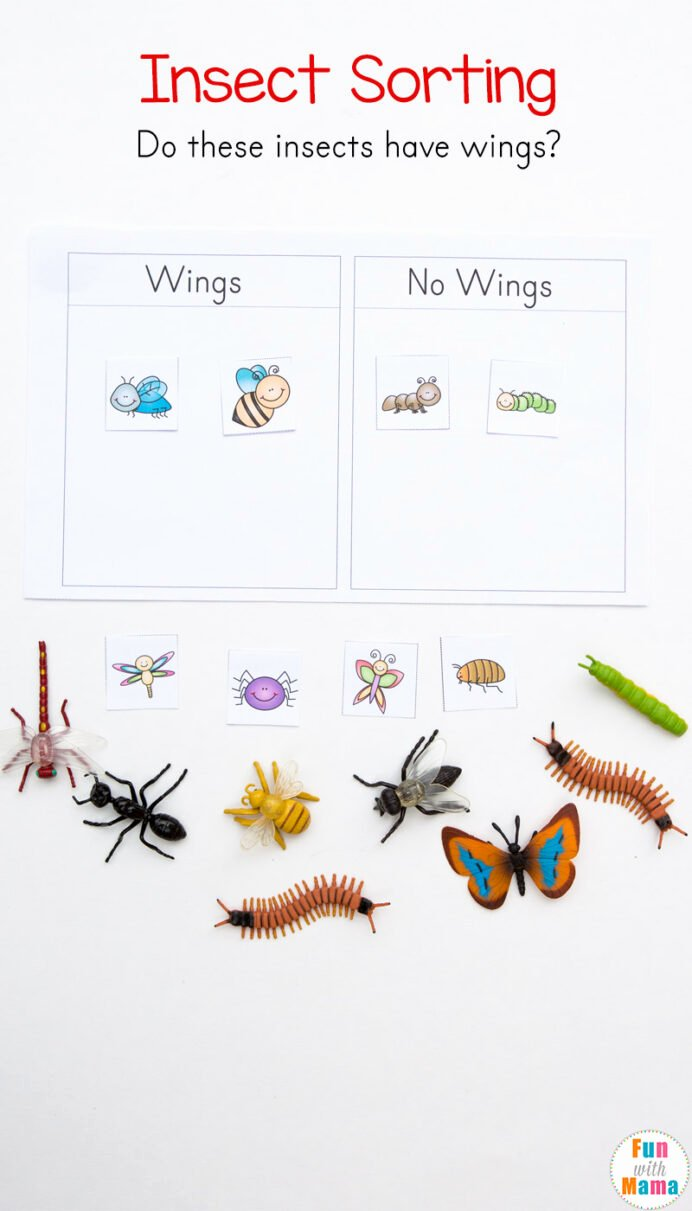 Free Printable Insect Worksheets for Preschoolers Printable Free Parts the Insect Worksheets Teacher Made Insects