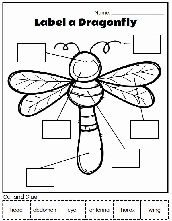 Free Printable Insect Worksheets for Preschoolers top Printable Preschool Bug Activities for Learning & Fun