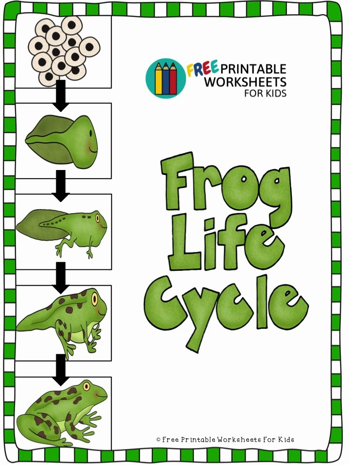 Frog Worksheets for Preschoolers New Frog Life Cycle