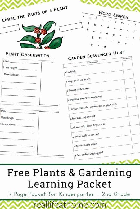 Gardening Worksheets for Preschoolers Kids Free Plant Worksheets for Kindergarten 3rd Grade Perfect