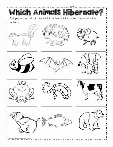 Hibernation Worksheets for Preschoolers Best Of Animals that Hibernate