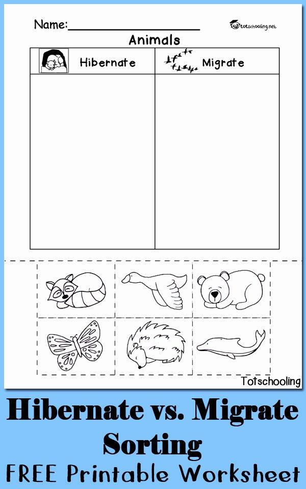 Hibernation Worksheets for Preschoolers Free Hibernation Vs Migration Animal sorting Worksheet
