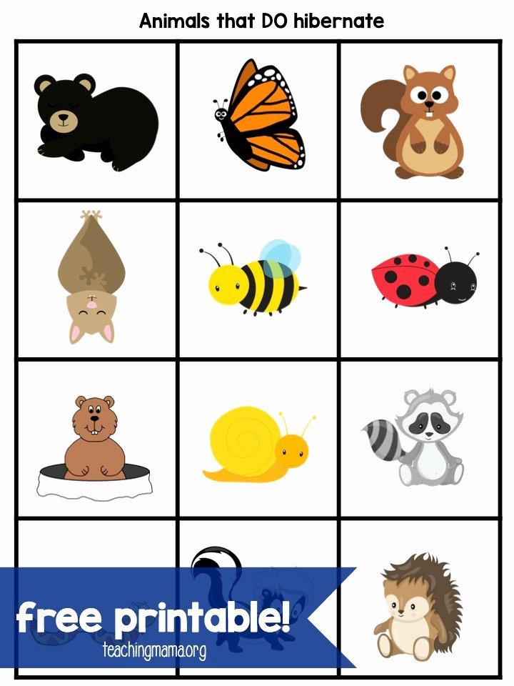 Hibernation Worksheets for Preschoolers Kids Hibernation Activities for Preschoolers Teaching Mama
