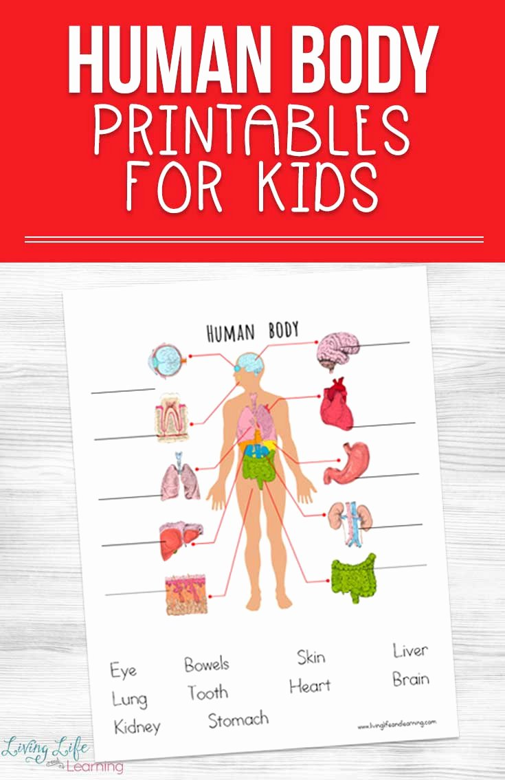 Human Body Worksheets for Preschoolers Free Human Body Printables for Kids