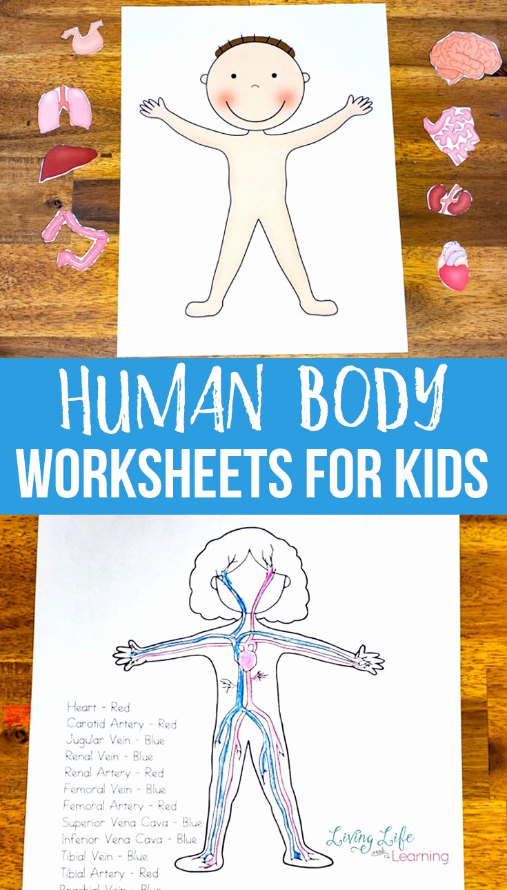 Human Body Worksheets for Preschoolers Kids Human Body Worksheets for Kids