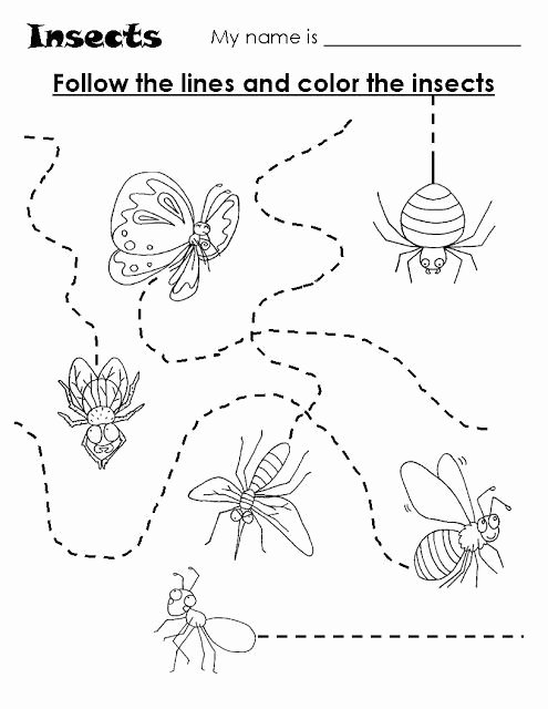 Insects Worksheets for Preschoolers Best Of Animal Trace Worksheets for Kids