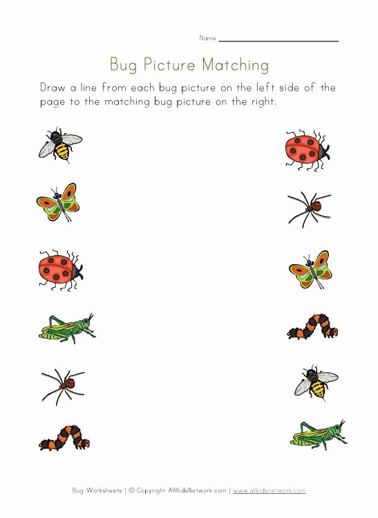 Insects Worksheets for Preschoolers Inspirational Bugs Worksheet for Kids Picture Matching