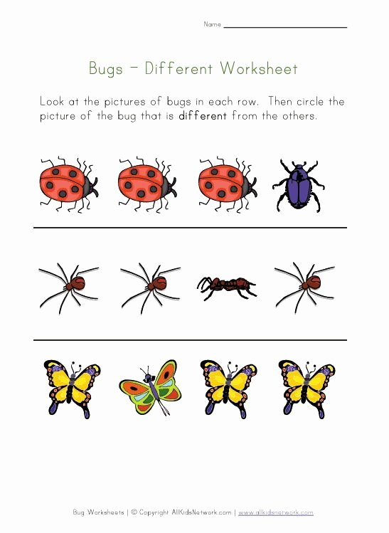 Insects Worksheets for Preschoolers top Bugs Worksheet Recognize Different Insects
