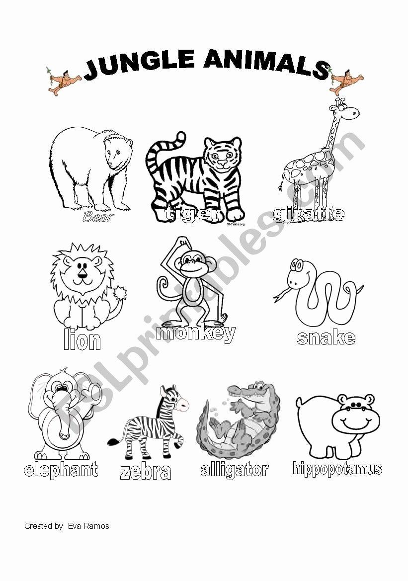 Jungle Animals Worksheets for Preschoolers Kids Jungle Animals Worksheet 1 Esl Worksheet by Evaramos