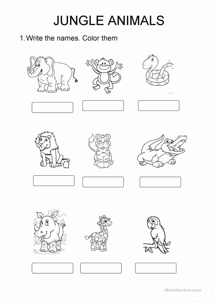 Jungle Animals Worksheets for Preschoolers Lovely Jungle Animals English Esl Worksheets for Distance Learning