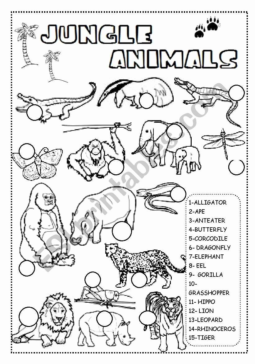 Jungle Animals Worksheets for Preschoolers New Jungle Animals Worksheet Esl Worksheet by Ineta