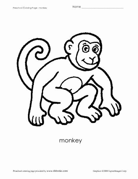 Monkey Worksheets for Preschoolers Free Preschool Coloring Sheet Monkey Worksheet for Pre K